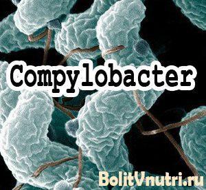 kampilobakterii02 300x276 - Симптомы и лечение кампилобактериоза у человека